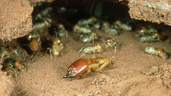 Signs of Termites in Your Home and What You Can Do